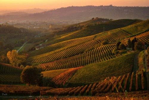 Langhe, wines and castles